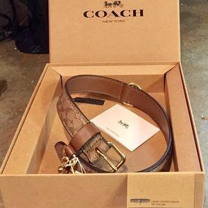 NIBWT Beautiful Coach Pet Collar Large Dog 19-21in